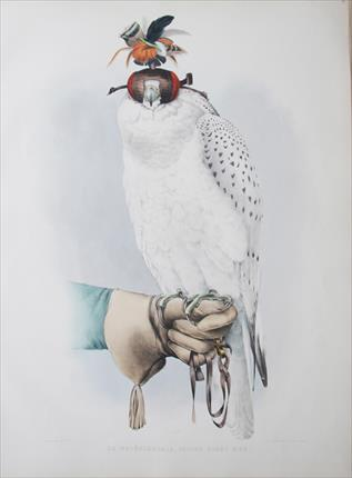 White Gyr Illustration taken from the Traite de Fauconnerie
