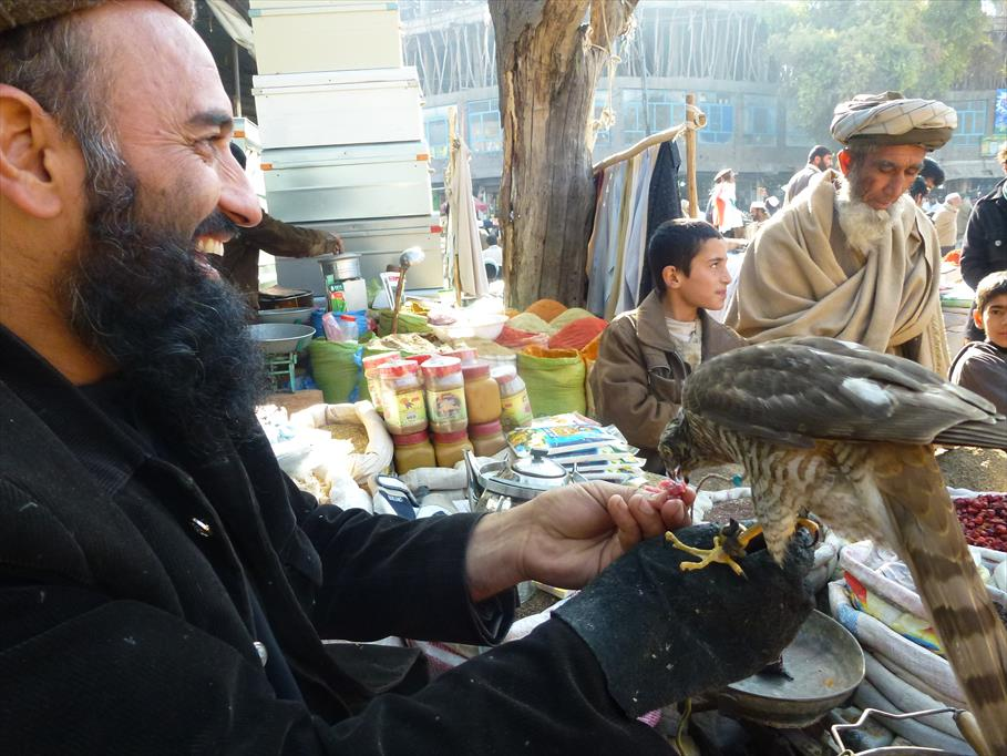 Falconry Images from Afghanistan by Kamran Khan 1 part