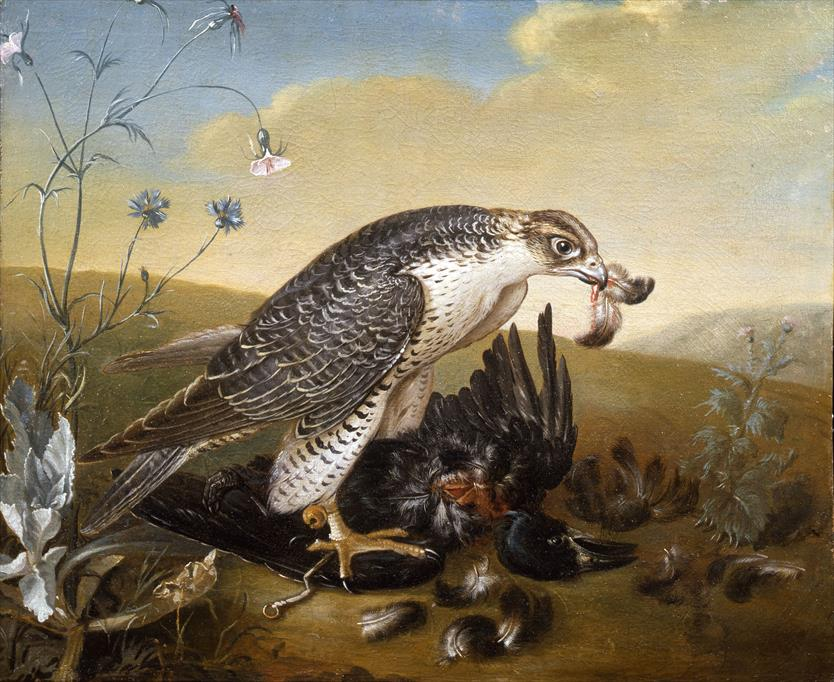 The Peregrine Falcon on prey by French artist Spheyman