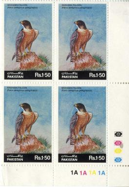 Shaheen Falcon (Falco peregrinus peregrinator) from Pakistan issued in 1986
