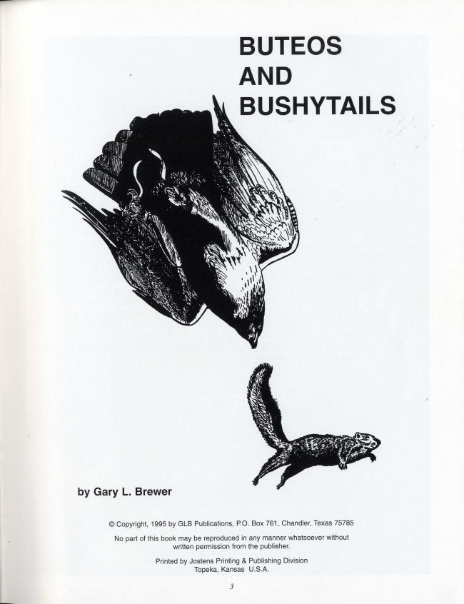 Buteos and Bushytails by Gary L. Brewer