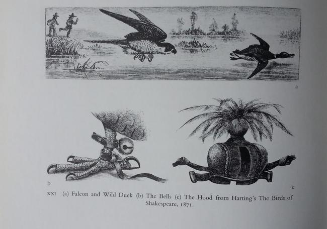 An image from the book