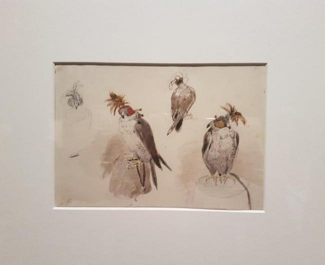Water colours on falconry by Charles Rochussen (1814-1894) in Dortrecht, NL