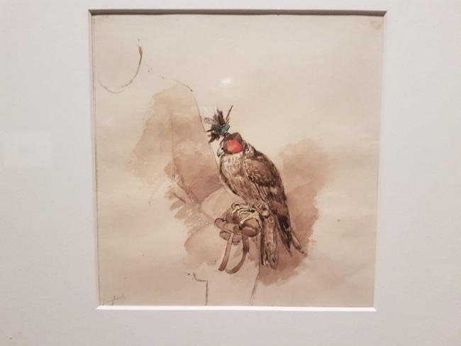 Water colours on falconry by Charles Rochussen (1814-1894) in Dortrecht, NL 2