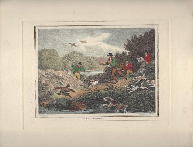 ANTIQUE HAND COLORED AQUATINT,PLATE ENGRAVING,SAMUEL HOWITT,DUCK HAWKING,1799
