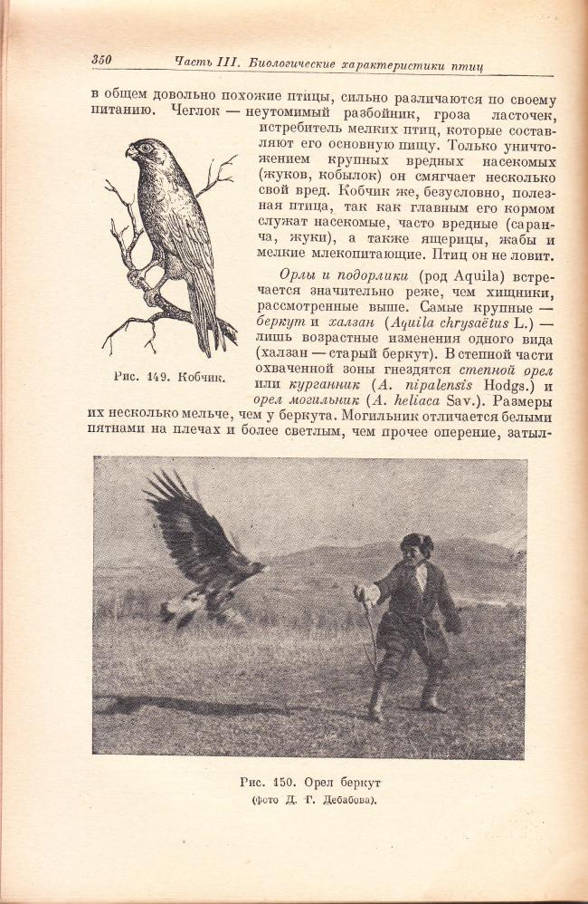 Berkutchi with Golden Eagle in the book of Aleksandr Promptov (1898-1948)