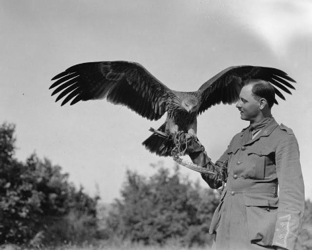 A British Army officer with his pet golden eagle in Salonika