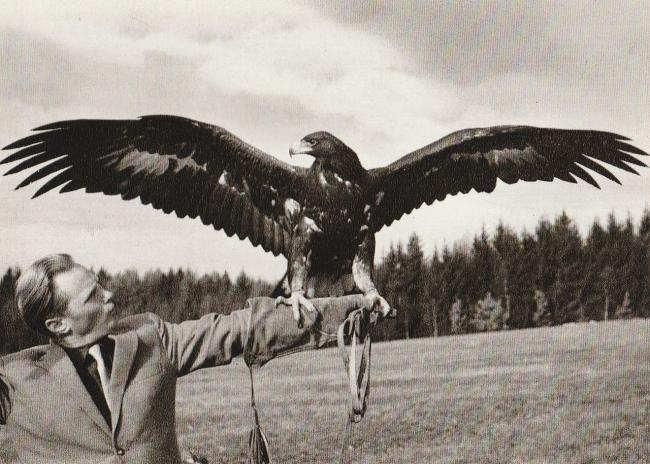 Master -Falconer Kollinger with the Golden Eagle