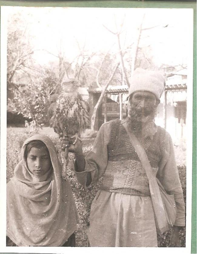 Falconer with a laggar photographed by Eustace Poles in Kashmir in 1945-1946