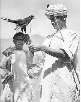 Falconer in Afghanistan